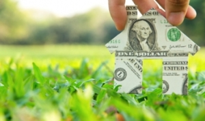 home-made-of-dollar-on-grass
