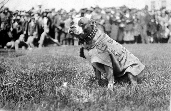 April 4, 1926  America's 1st War Dog