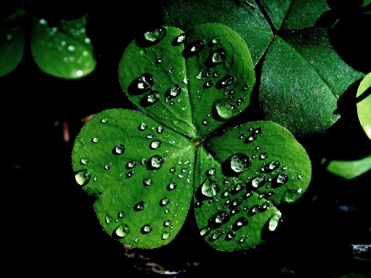 March 17, 432 Saint Patrick'sDay