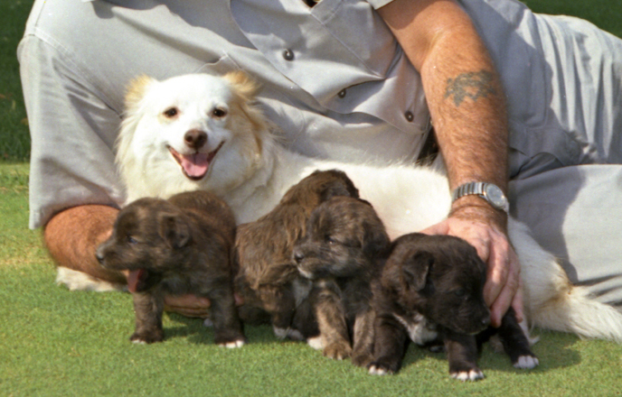 kennedy-dog-pushinka-puppies