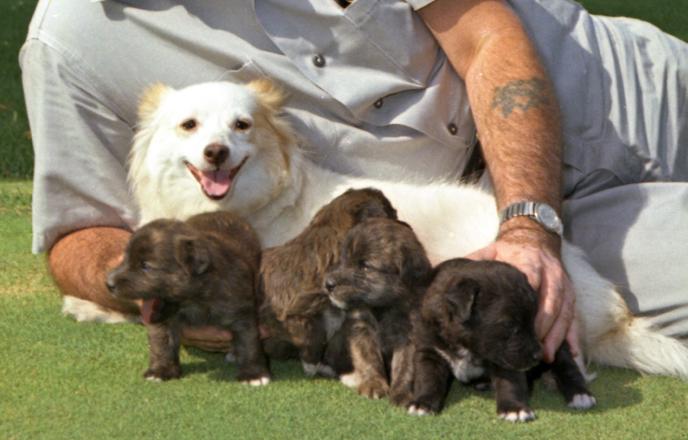 kennedy-dog-pushinka-puppies