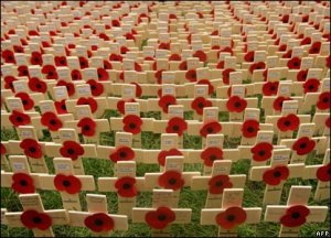 flanders field poppies 4