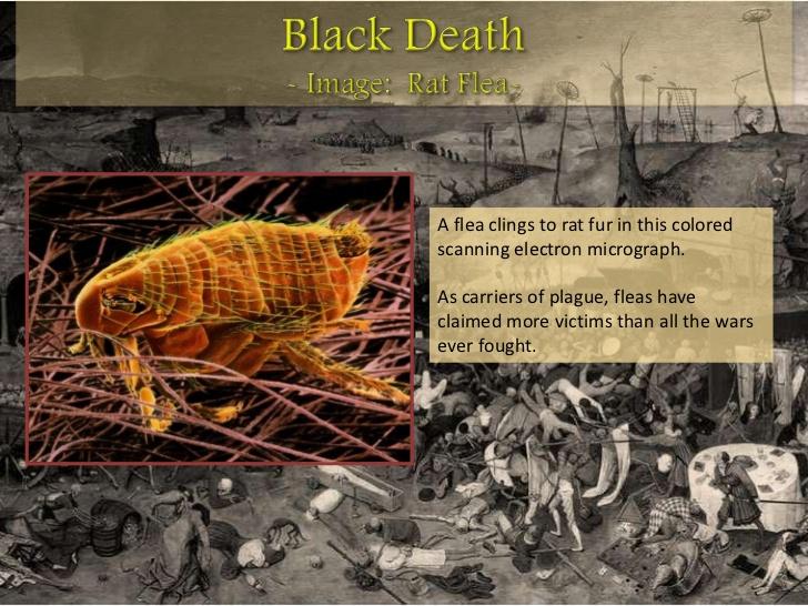 medieval-life-the-black-death-bubonic-plague-black-plague-8-728