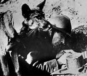 Chips, War Dog