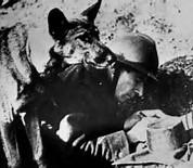 Chips, War Dog