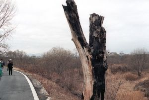 DMZ_incident_tree