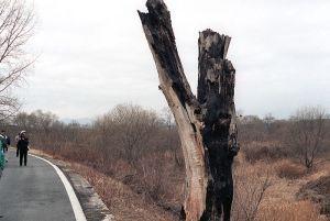 DMZ_incident_tree