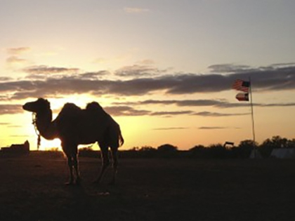 Camel-sunset-flags-300x225