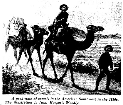 Camel_from_Harpers_Weekly