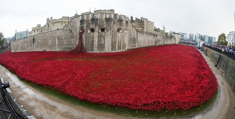 Red poppies, tower of london