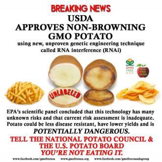 GMO Hysterics