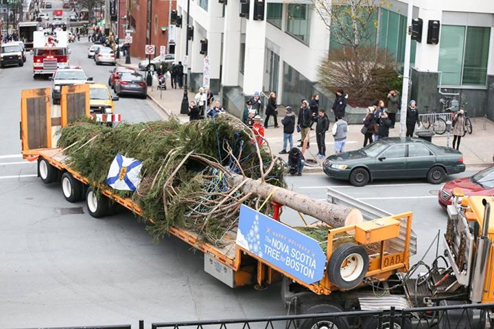 Halifax Tree Sendoff
