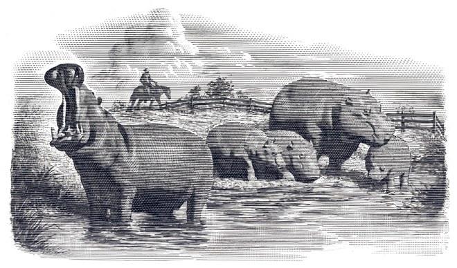 December 16, 1884 RiverHorse