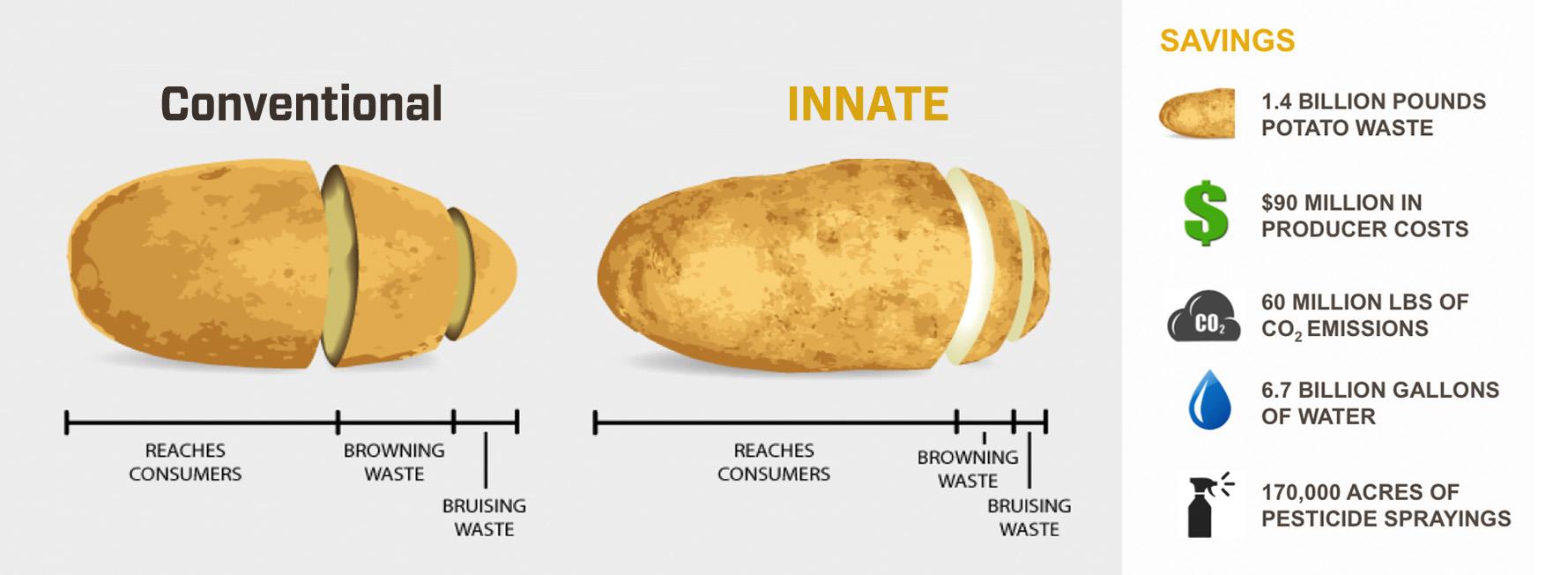 potato-infographic