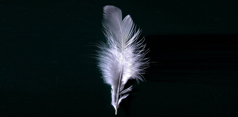 March 28, 1918 A White Feather