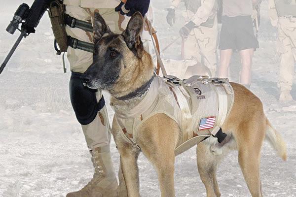 dogs-cairo1