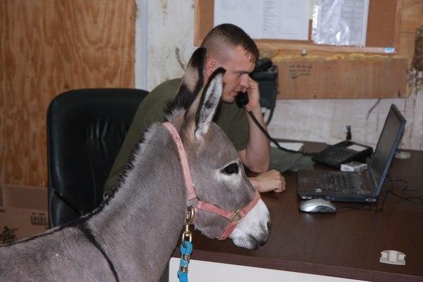 Smoke visits Sgt Lonnie Forrest