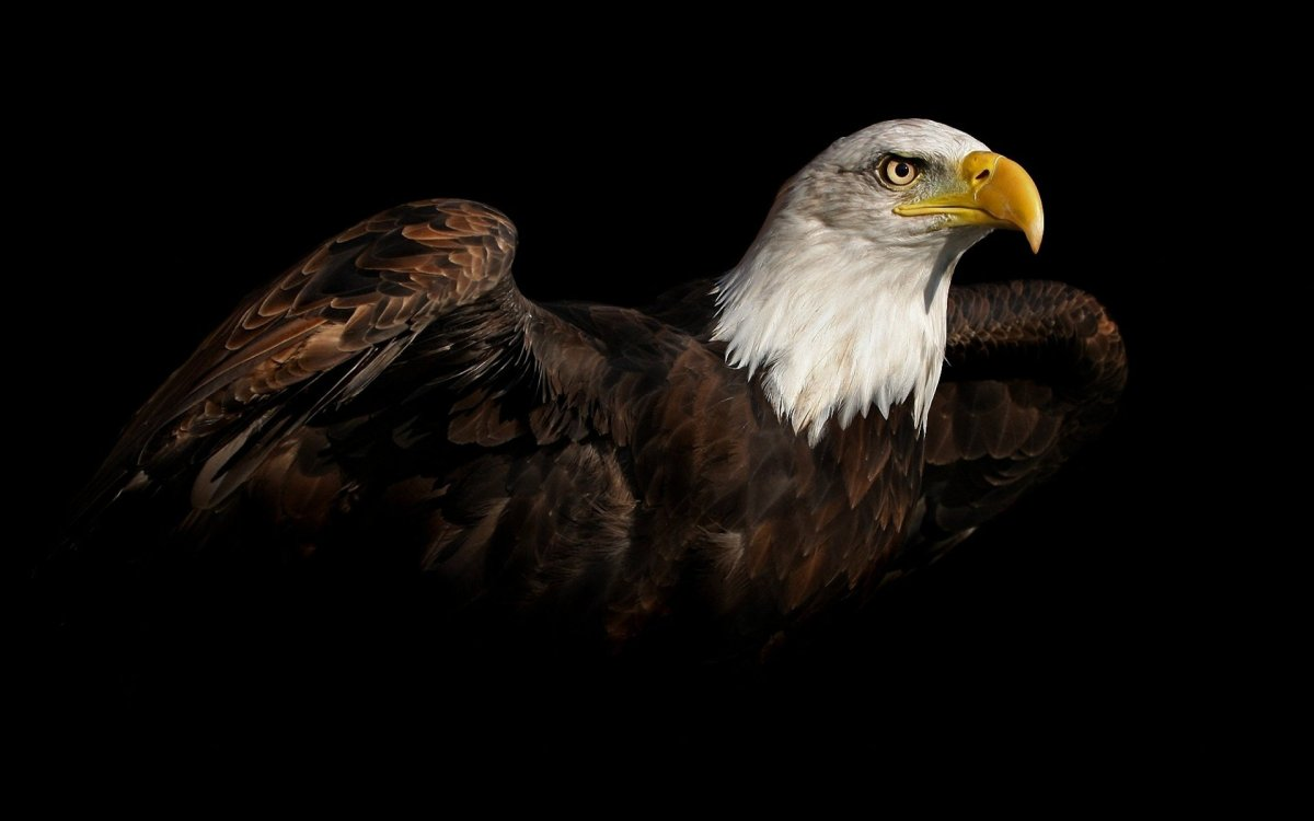 june 20 1782 american eagle today in history