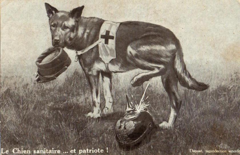 dog-19-1600x1200-4-opt897x579o00s897x579.jpg