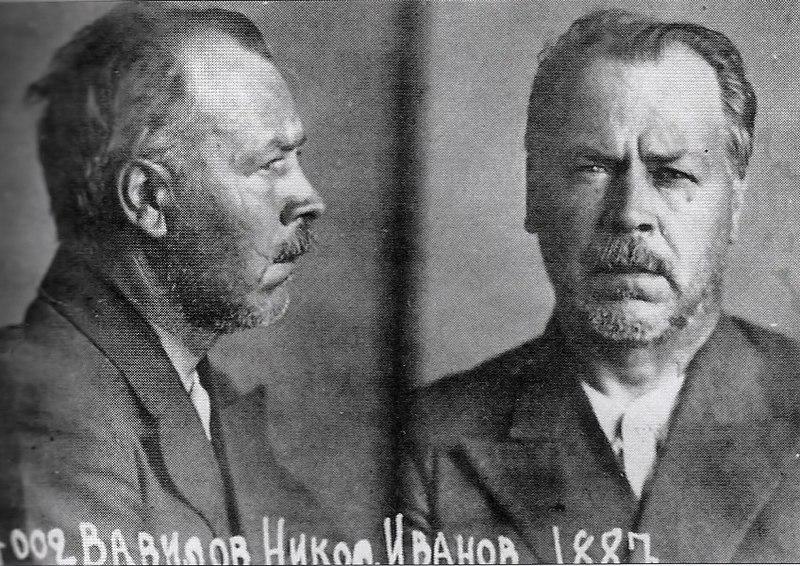 800px-Vavilov_in_prison