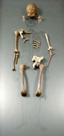neanderthalskeletonsm