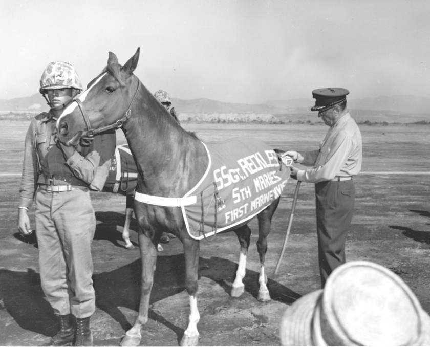 sgt-reckless_PHOTO_D