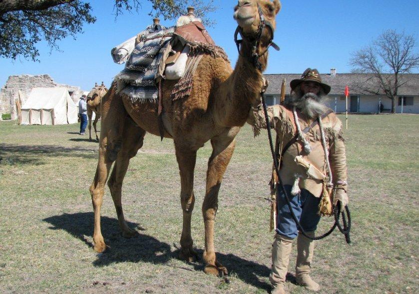 camel.jpg__1072x720_q85_crop