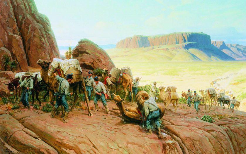 camelsintex-4-color-final