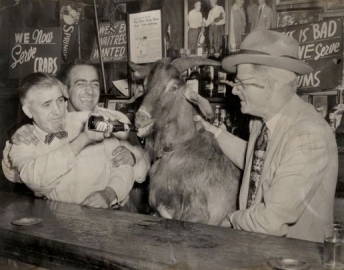 curse-of-the-billy-goat