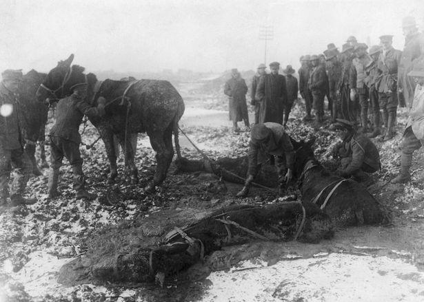 WW1-animals