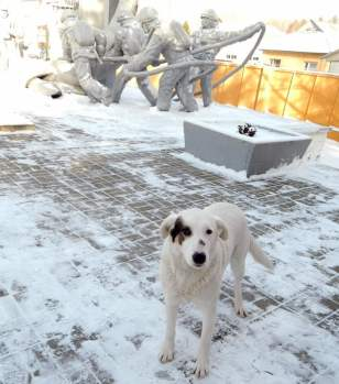 The dogs of Chernobyl have no shelter, in the harsh Ukrainian winter