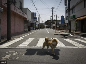 Futaba Ghost Town Japan Fukushima Daiichi Nuclear Disaster Dead Empty Chernobyl Pripyat Evacuation Zone Radiation Levels Contamination Stray Dog 470x350 www.RadioactiveChat.Blogspot.com