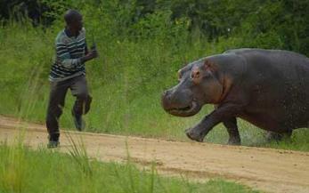 p-hippo-1_1467398c