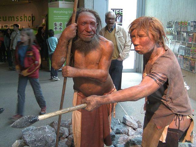 800px-neandertala_homo__modelo_en_neand-muzeo