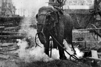 electrocuting_an_elephant_edison_film_1903_frame_shot