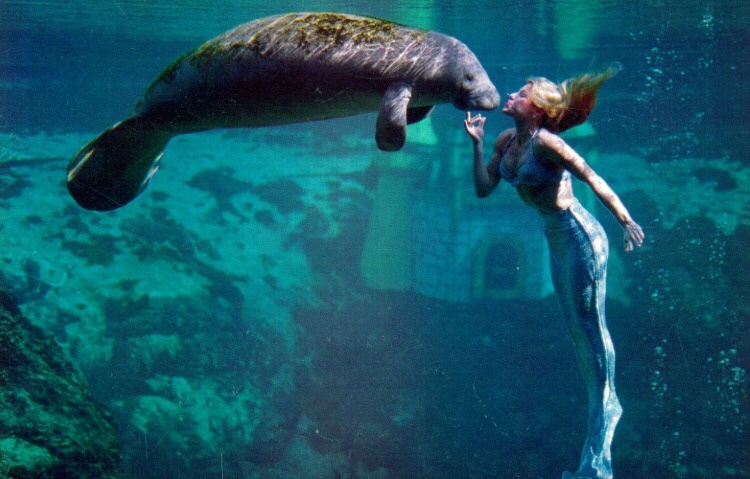 January 9, 1493 Of Mermaids and Manatees