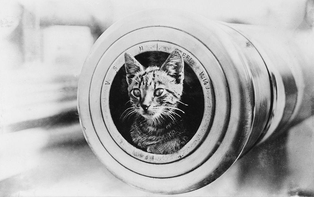 1024px-A_cat_on_HMAS_Encounter