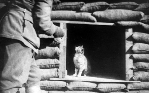 Trench cat, Gallipoli Peninsula, 1915