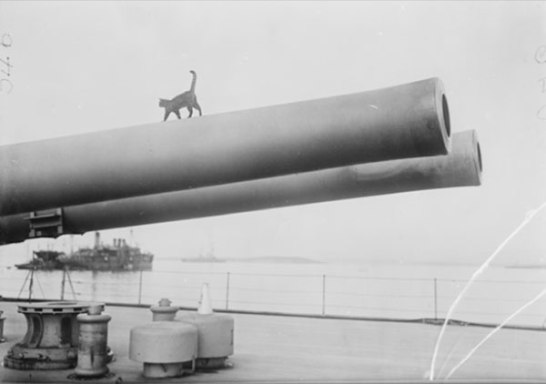 Ship's cat, HMS Queen Elizabeth, Gallipoli Peninsula, 1915