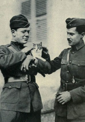 Officers of the U.S. 2nd Army Corps with a cat they discovered in the ruins of Le Cateau-Cambrésis