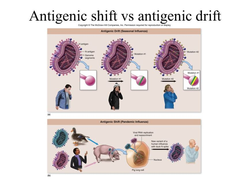 Antigenic shift vs antigenic drift