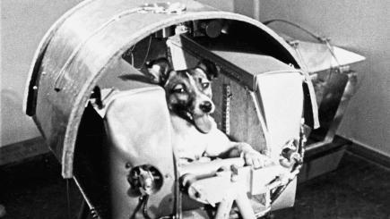 Laika and capsule