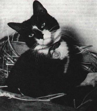simon-hms-amethyst-cat