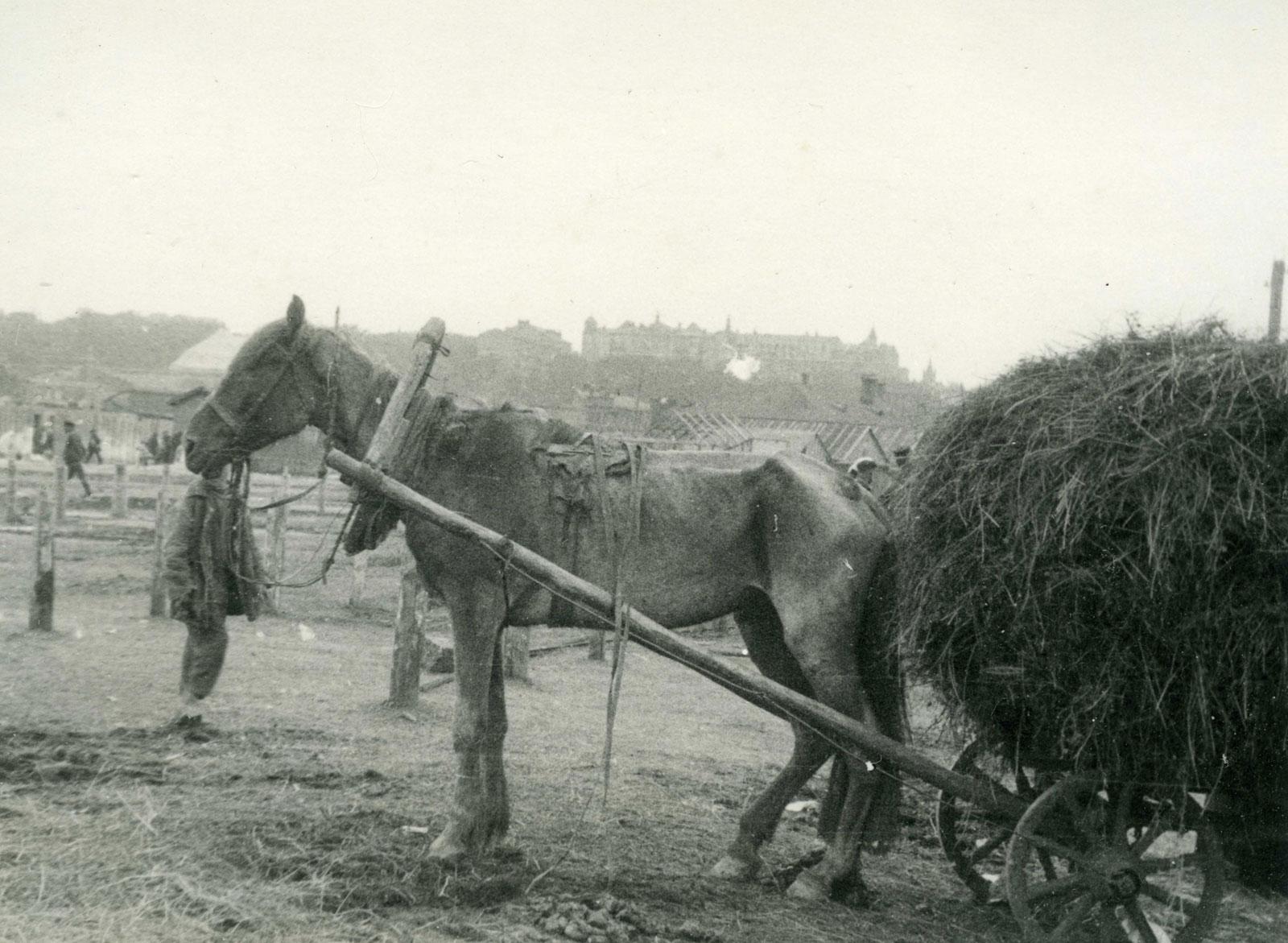 Holodomor-Great-Famine-Ukraine-emaciated-horse-1932-1933-Alexander-Wienerberger-photographer.jpg