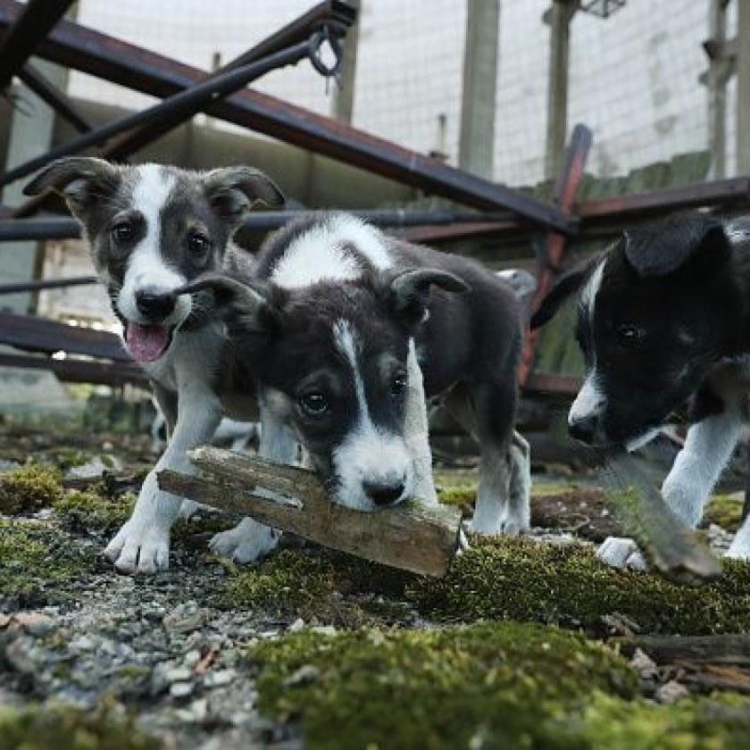 0720-dogsfront.jpg