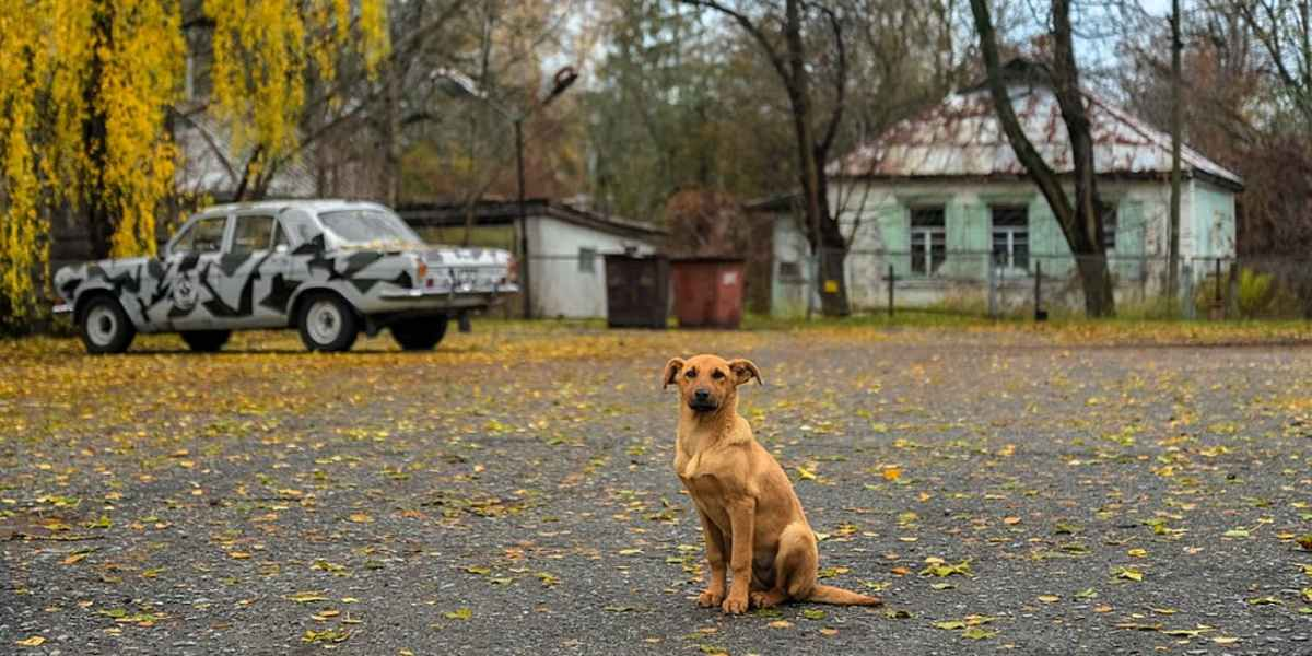 December 19, 1986 The Lost Dogs of Chernobyl