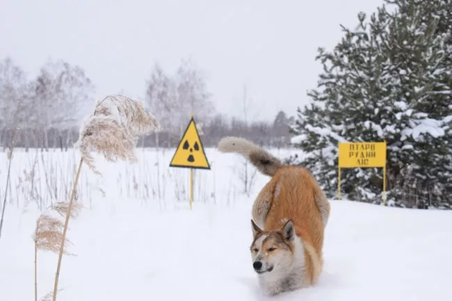 Dogs of Chernobyl.jpg