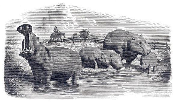 hippo-ranch.jpg