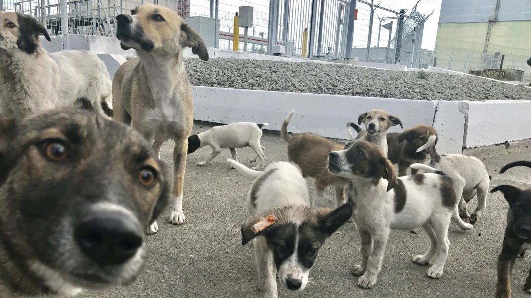 vegan-plant-based-news-dogs-livekindly-Cropped-1-1-1068x601 (1).jpg