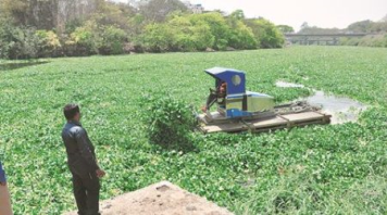 Water Hyacinth.png